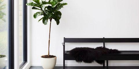گیاه آپارتمانی زینتی