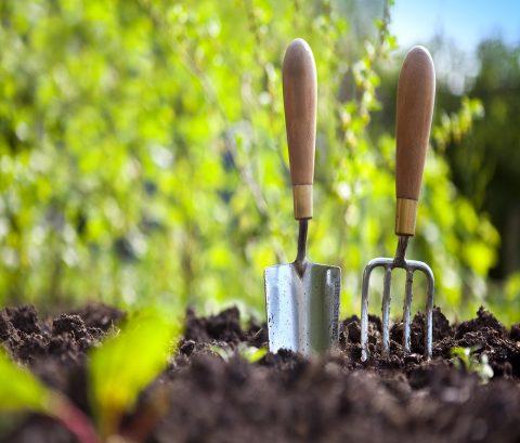 خدمات باغبانی در منزل