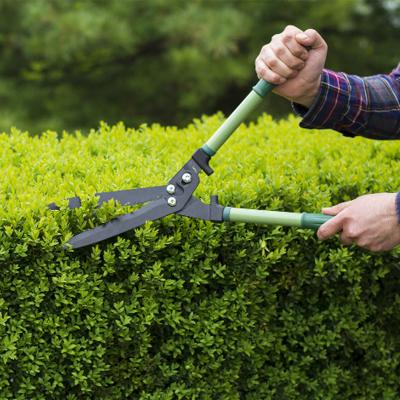 باغبانی و معماری سبز
