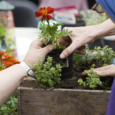مشاوره باغبانی
