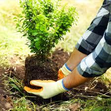 خدمات باغبانی هورس