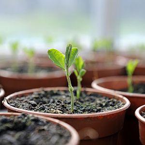 رشد گیاهان با کود مایع