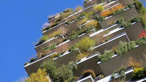 انتخاب گیاهان نمای ساختمان ها